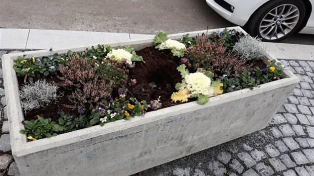 Lidé kradou květiny z truhlíků, odnesou si ale i keř nebo jehličnan