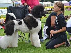 Mezinárodní výstava psů návštěvníkům ukázala přes tři tisíce psích mazlíčků