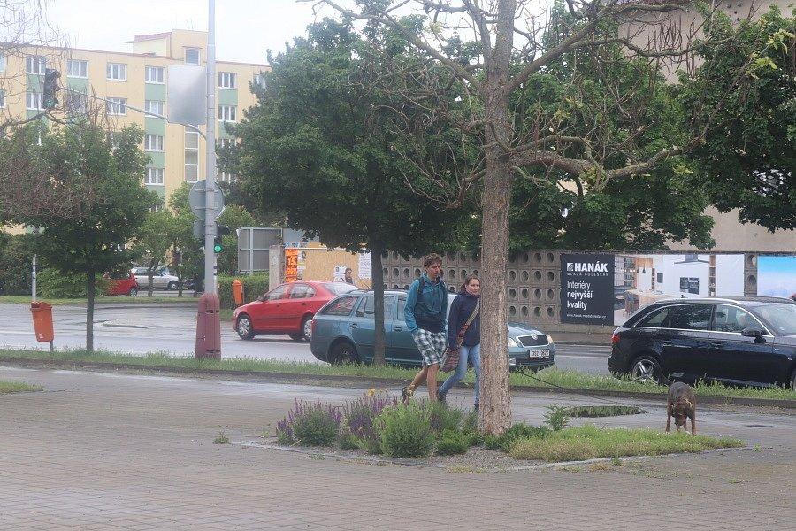 Navrtané stromy na Jičínské ulici.