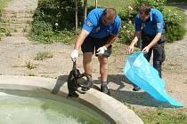 Utonulého psa museli strážníci vylovit z kašny.