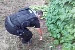 Městští policisté odhalili desítky použitých jehel.