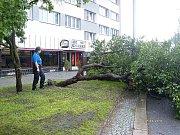 Spadlý strom na třídě T. G. Masaryka v Mladé Boleslavi.