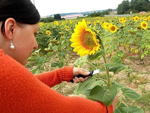 Na slunečnice s kudlou v ruce