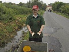 Ryby skončily v příkop u silnice Chotětov