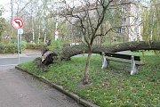 Větrná kalamita na Boleslavsku.