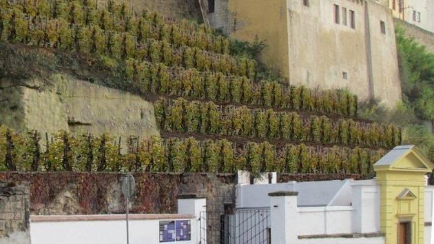 Vizualizace vinice, která by měla vyrůst na Ptácké ulici.