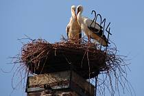 První nájemníci nového hnízda se zdrželi jen krátce.