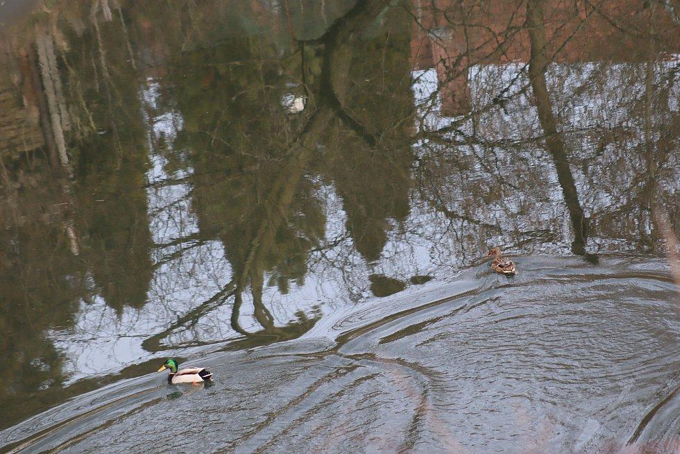 Sníh rychle taje. Hladina Jizery významně nevzrostla.