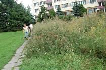 Vysoká tráva na pár metrech čteverčních na Slovance v Mladé Boleslavi.
