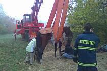 Záchrana klisny nedaleko obce Lipník.