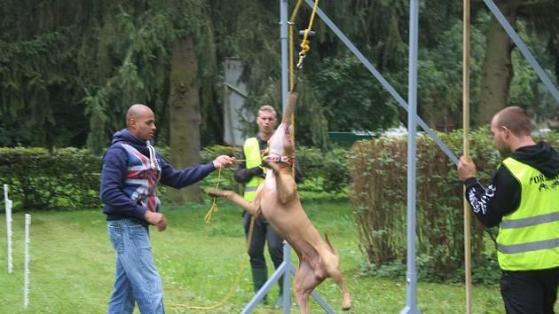 Uskutečnila se první soutěž Gladiator Games.