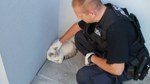 Zraněnou kočku strážníci odvezli na ošetření a pak předali do útulku.