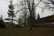Stromy v benáteckém parku jsou podle radnice v pořádku.