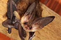 Zvířetice seznámí veřejnost s netopýry