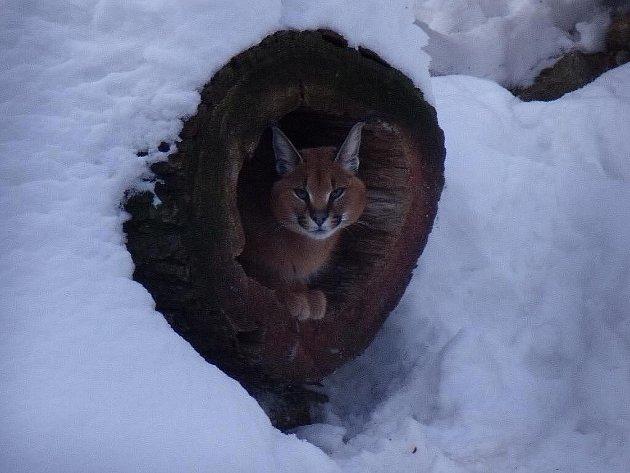 Ilustrační foto. Jihlavská zoo v zimě.