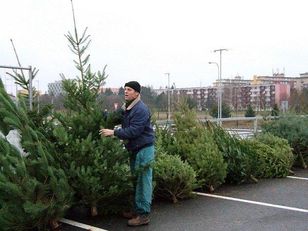 Zákazníci, kteří v těchto dnech míří do obchodních center v Třebíči, zatím spíše okukují stromky, které tam prodejci nabízejí. Kdo už zde koupil, ve velké většině dal přednost borovici černé.