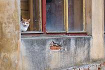 Místo koček by mohli dům v centru Dalešic obývat důchodci. Přispět k tomu může státní dotace.