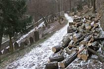 a pětatřicet stromů bylo nedávno vykáceno v areálu židovského hřbitova v Třebíči, zapsaného na seznamu UNESCO.