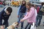 Velkou pozornost poutaly ukázky canisterapie, v rámci které se pracuje se psy.