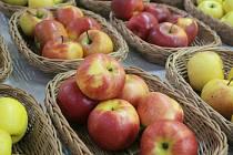 Ochutnávka jablek a brambor v Třebíči