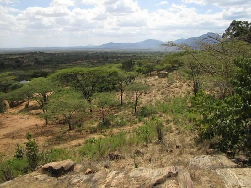 Somálsko-masajská savana v tzv. Africkém rohu je typickým biotopem bércounů z nově pojmenovaného rodu Galegeeska.
