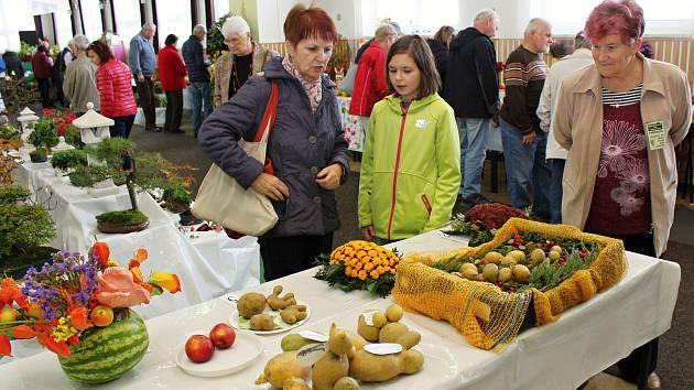 Jablka, chryzantémy, brambory. Blíží se velká zahrádkářská výstava