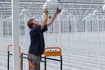 Hydroponický skleník.