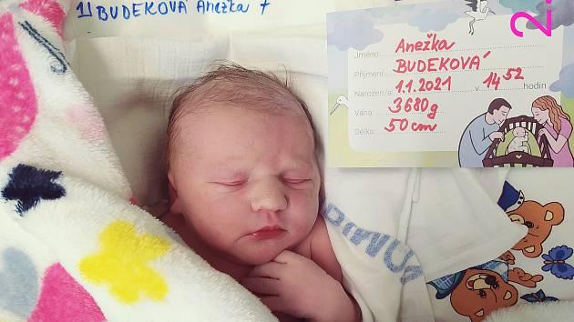 Anežka Budeková, 1.1.2021, 3680 g, 50 cm, Včelnička (první miminko porodnice Pelhřimov v roce 2021)