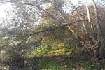 Předpověď meteorologů se vyplnila a Vysočinu zasáhl silný vítr. Od sedmé hodiny ranní do desáté hodiny dopolední zasahovali hasiči u více než padesáti události v souvislosti s počasím.