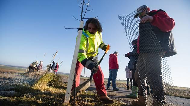 Výsadba ovocných stromů u Jinošova.
