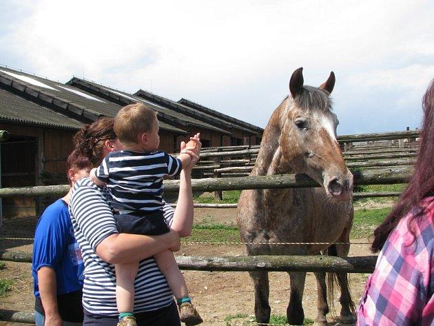 Farmářské slavnosti hostil Appaloosa ranč v Lažínkách u Moravských Budějovic. Atrakcí byla spousta.