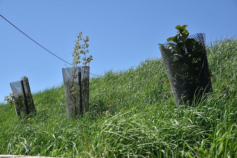 Každoročně místní sázejí nové stromky a aleje. Loni se bohužel nepodařilo sázení s účastí veřejnosti.