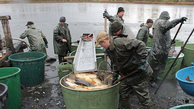Výlov rybníku Okrouhlík