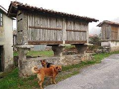 Kromě sušáren kukuřic v Galicii často potkáte i nejlepší přátele člověka. Zde jsme oba tyto neoficiální symboly celé trasy zachytili pohromadě.