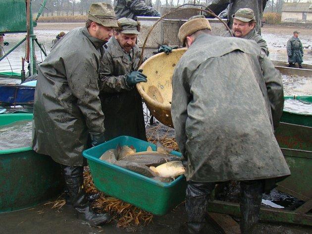 Výlov rybníku Velký Bor.