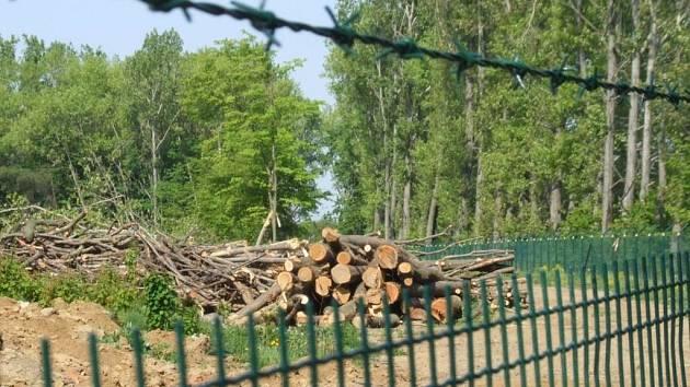 Z lesa už nezbylo skoro nic. Dělní kácejí zbytky stromů, které byly jedinou přirozenou protihlukovou ochranou obce.