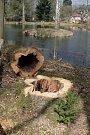 Arboretum v Jemnici