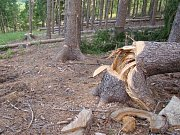 Policie stále hledá toho, kdo způsobil jedno z největších poškození lesa na Vysočině v posledních letech. K nařezání asi šesti set kusů borovic a smrků u Horních Vilémovic na Třebíčsku se někdo odhodlal před třemi lety.
