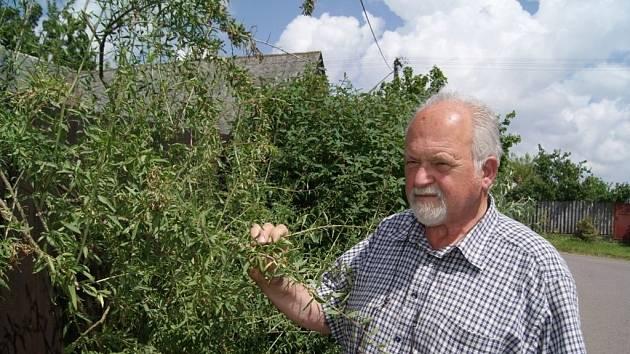 Odborník na asijské léčivé rostliny Pavel Valíček žije v Martínkově na Třebíčsku, kde pečuje o svou domácí zahradu.