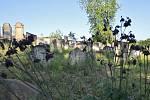 Židovský hřbitov v Polici.