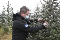 Vánoční stromky pěstují také na plantáži v Ohrazenici u Jaroměřic nad Rokytnou.