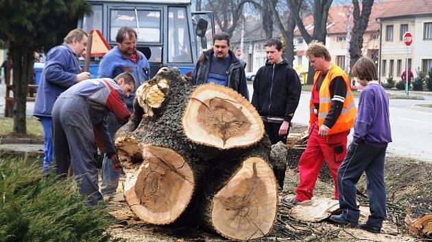 Ve Vladislavi o víkendu  pokáceli staré kaštany a jasan u hlavního tahu na Brno.