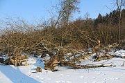 Bobří práce v údolí Stařečského potoka.