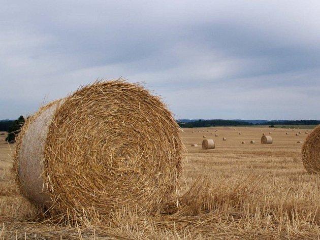 Na Vysočině je sklizena větší část obilí.