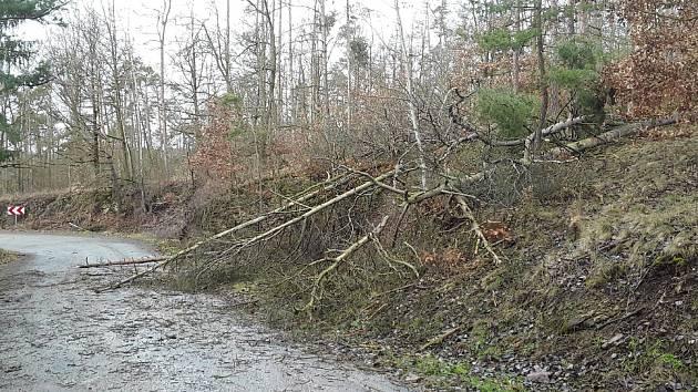 Vítr shazuje stromy na silnice.