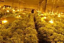 Policisté tam odhalili ilegální velkopěstírnu marihuany. Policisté na místě zabavili pět tisíc rostlin konopí.