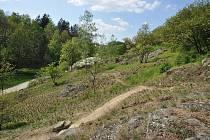 V sobotu ožije svah proti třebíčskému židovskému hřbitovu ochránci přírody a dobrovolníky, kteří přijdou pomoci s úklidem stráně.