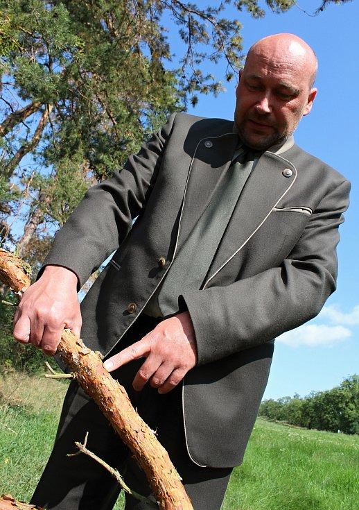 Dalibor Šafařík ukazuje místo napadené hmyzem.
