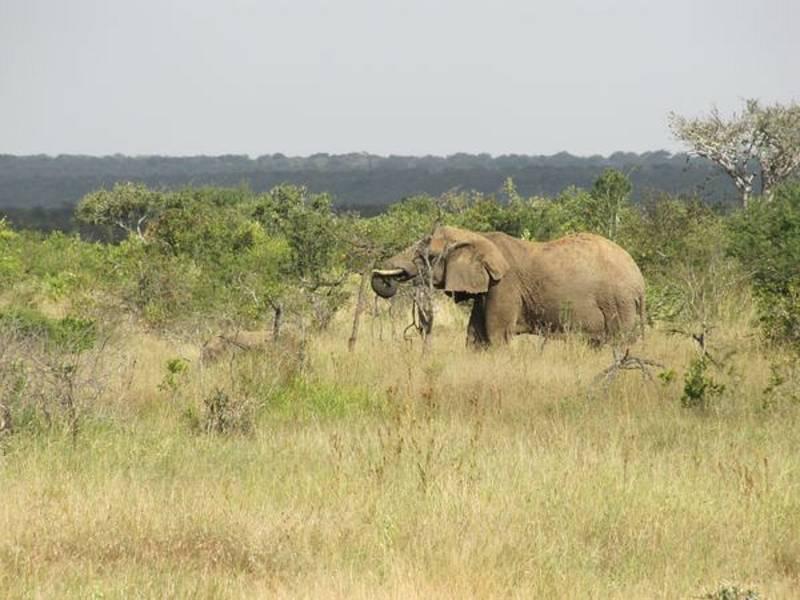 Ve stejném typu ekosystému žijí v severní Keni i příbuzní bércounů, sloni afričtí.