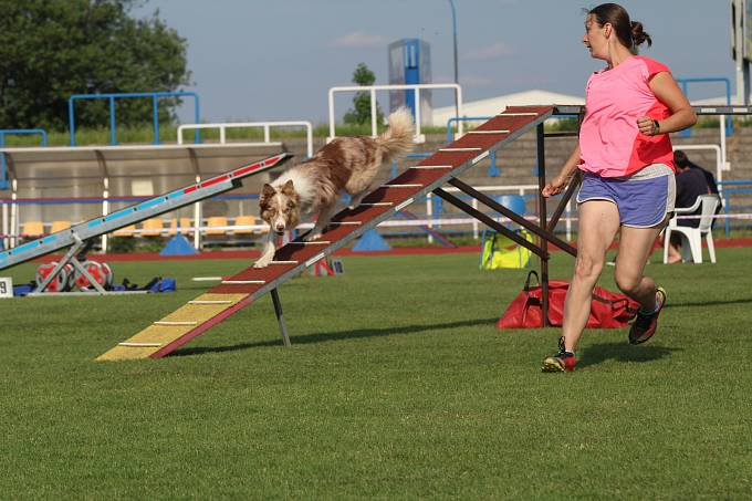 Mezinárodní mistrovství republiky border kolií v agility.